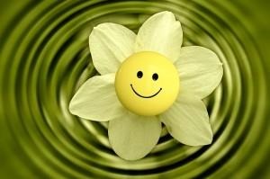 flower-233838_640