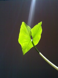 leaf-57126_640