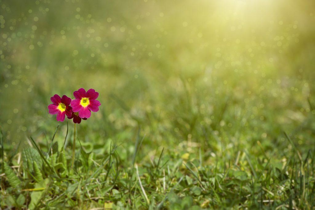 meadow-2470419_1920